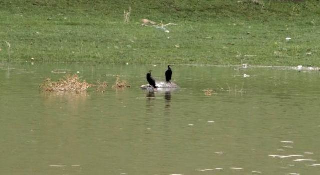 Kars Baraj Gölü' su kuşlarıyla doldu