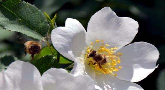 Keklik Vadisi rengarenk açan çiçekleriyle doğa ve fotoğraf tutkunlarını ağırlıyor
