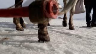 Çıldır'ın atlı kızaklarının masalsı gezintisinin sırrı: Çivili nal