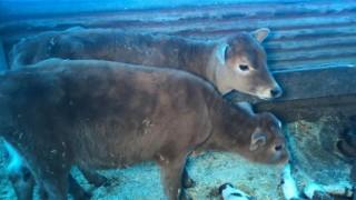 Kars'ta İnternetten aldığı hayvanlar öldü, dolandırıcılık suçlamasında bulundu